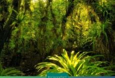 Cây rừng Amazon lưu giữ lịch sử khai thác của con người