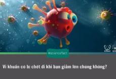Vi khuẩn có bị chết đi khi bạn giẫm lên chúng không?