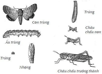 Tại sao có một số côn trùng lại có thể biến thành con nhộng, còn một số khác lại không?
