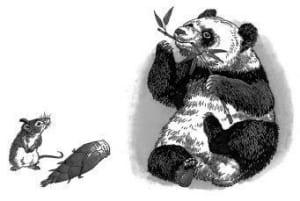 Gấu trúc (gấu mèo) có thể tuyệt chủng không?