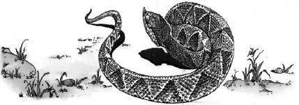 Làm thế nào để phân biệt được giữa rắn độc và rắn không độc?