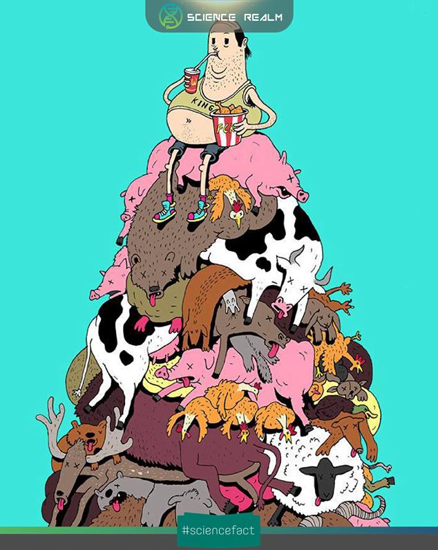 Số lượng động vật con người tiêu thụ