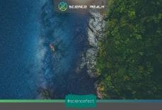 Số lượng cây xanh trên Trái đất
