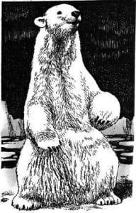 Tại sao Nam Cực lại không có gấu Bắc Cực?