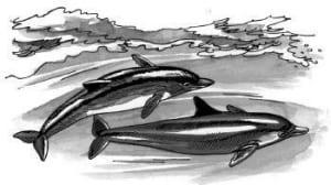Tại sao cá heo có thể bơi với tốc độ cao?