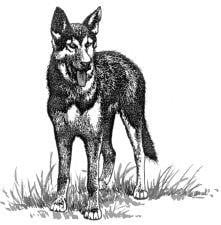 Tại sao chó thường hay thè lưỡi vào mùa hè?