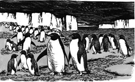Tại sao chim cánh cụt có thể chống lại được giá rét của Nam Cực?