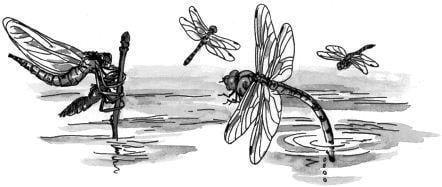 """Tại sao chuồn chuồn phải """"đạp nước""""?"""