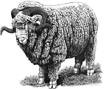 Tại sao mắt của một số động vật có vú mọc ở phía trước mặt, còn một số khác lại mọc ở hai bên mặt?