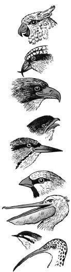 Tại sao mỏ của loài chim lại có nhiều hình dạng?