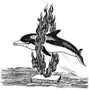 Tại sao nói cá heo là động vật thông minh?