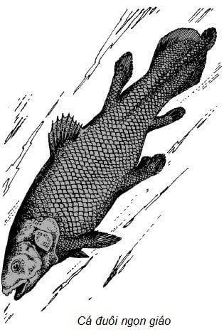 Tại sao nói cá là tổ tiên của loài lưỡng cư?