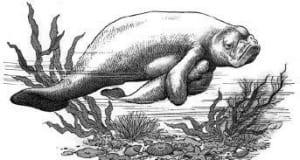 Tại sao nhân ngư được gọi là cá người đẹp mĩ nhân ngư?