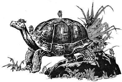 Tại sao rùa có tuổi thọ rất cao?