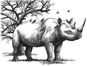 Tại sao trên mình của tê giác thường xuyên có chim tê giác đậu?