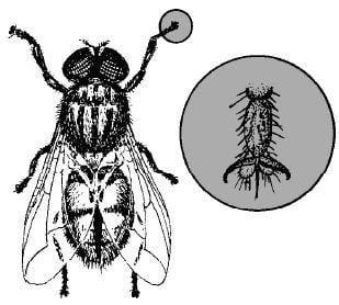 Vì sao ruồi có thể đứng vững trên mặt phẳng kính thẳng góc?