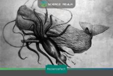 Gene của loài mực khổng lồ Architeuthis Dux giúp ta truy lại nguồn gốc của nhiều sinh vật sống