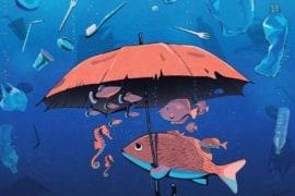 Kích cỡ rác thải nhựa mà động vật biển có thể nuốt