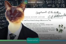 MÈO trở thành đồng tác giả của một bài báo khoa học về hiệu ứng trao đổi nguyên tử của Helium-3