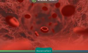 Một tế bào máu sẽ mất khoảng 60 giây để hoàn thành một vòng xung quanh cơ thể của chúng ta