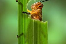 Số lượng côn trùng giảm gần 25% kể từ năm 1990
