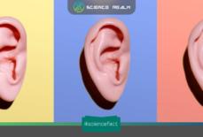 """Tạo ra tiếng động """"rầm rầm, bụp bụp"""" bên trong đầu bằng việc căng một nhóm cơ bên trong tai"""