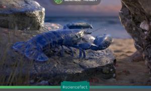 Tôm hùm có thể nghiền rác thải nhựa thành các vi hạt thứ cấp