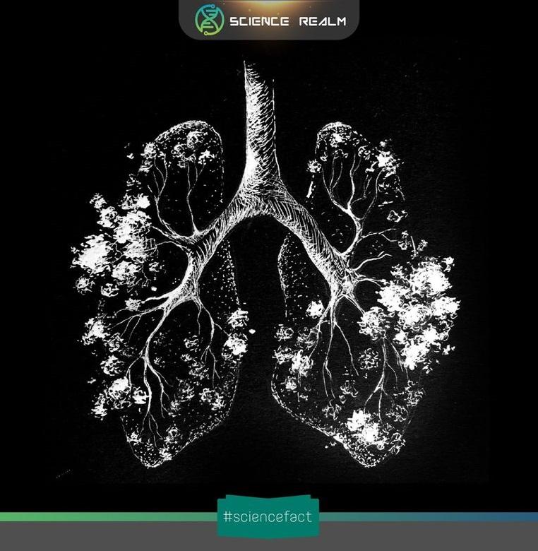 Trong mỗi hơi thở, phổi của chúng ta chỉ hấp thụ được khoảng 5% lượng không khí hít vào