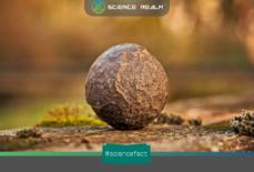 Nghịch lý tảng đá khiến Đấng toàn năng cũng phải bó tay?