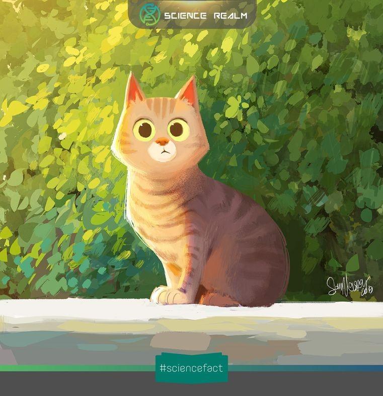 Tại sao mèo thích độ cao?