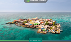 Đảo Santa Cruz del Islote – hòn đảo đông dân nhất thế giới