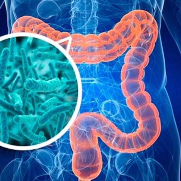 Tại sao phải bổ sung lợi khuẩn cho đường ruột?